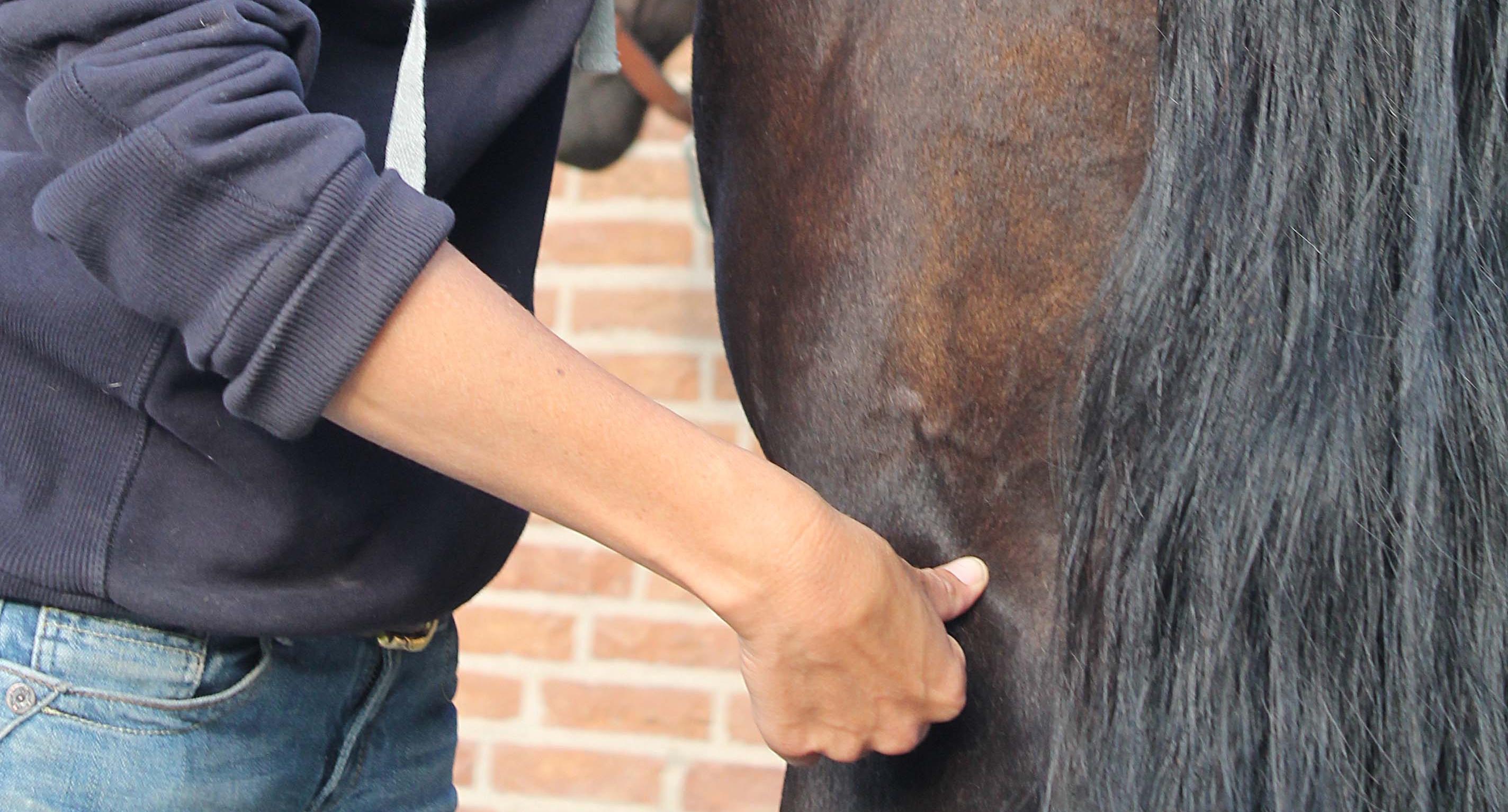 Dagcursus acupressuur Paard