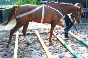 Paard in Balans met Guasha en Acupressuur